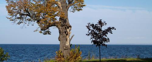 JRH_lightning_tree_Fall2010-0065